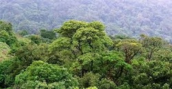 HC forms committee to weed out invasive plant species from Western Ghats