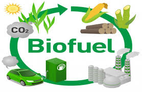 First state to implement biofuel policy