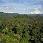 New antibiotic discovered in Mexico_s tropical forest