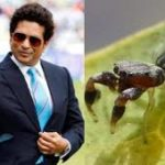 New Spider Species Named After Sachin Tendulka